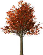 tree-1544723__180